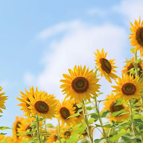 パスタが検索されやすい時期は春と夏です。
